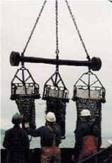 File:Newhaven Scallop dredge .jpg