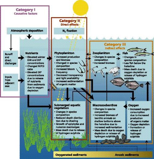 eutrophication flow chart wwwpixsharkcom images