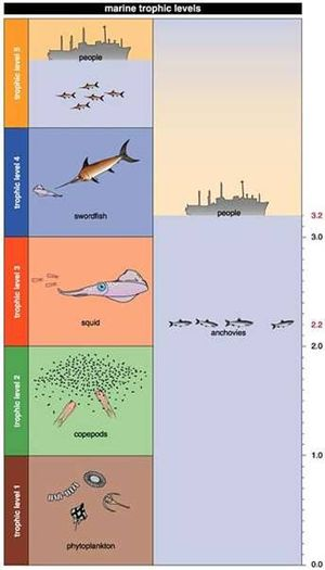 Trophic Level A Marine Example Coastal Wiki