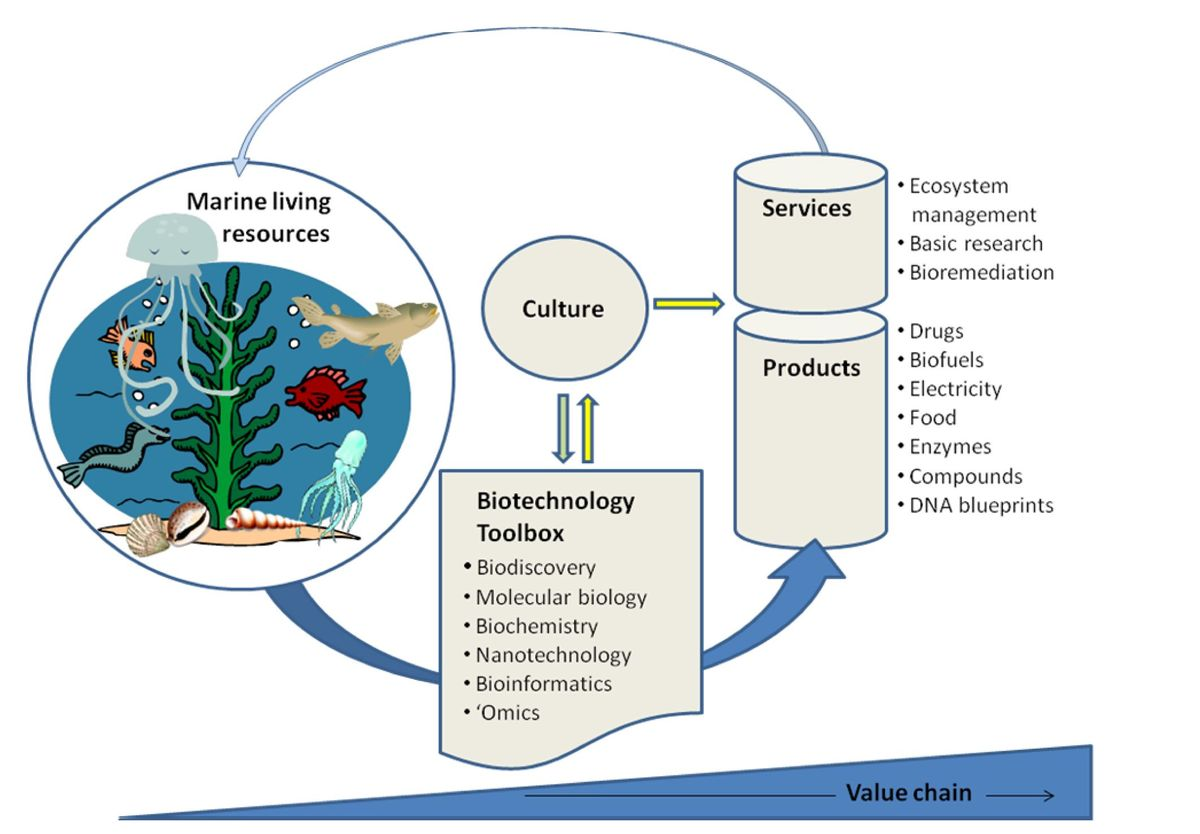 thesis on biotechnology Biotechnology is an interdisciplinary field that the results of the research project are incorporated into a senior thesis and presented at the biotechnology.
